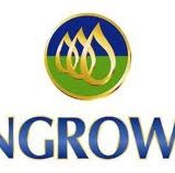 Pengrowth Energy Corp (USA) (NYSE:PGH)