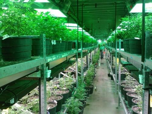 marijuana-269851_640
