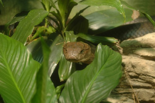 Top 7 Most Poisonous Snakes In The World