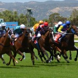 Tips for betting on horses