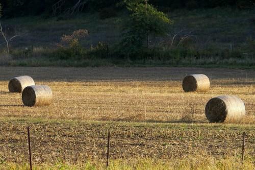 Iowa-hay-bale