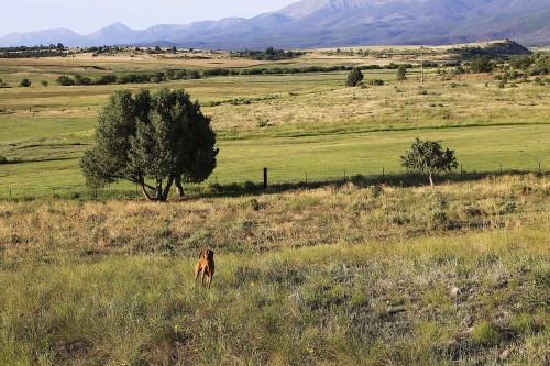 colorado-countryside