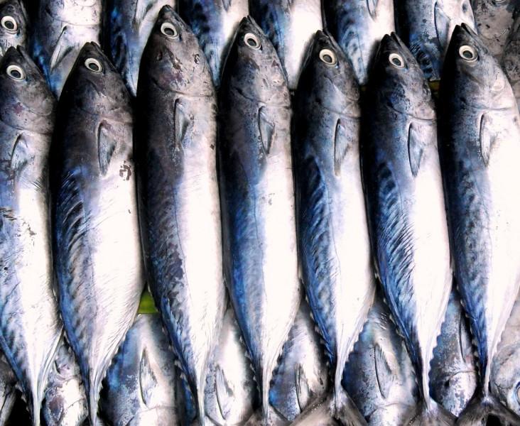 Consume fish in Finland