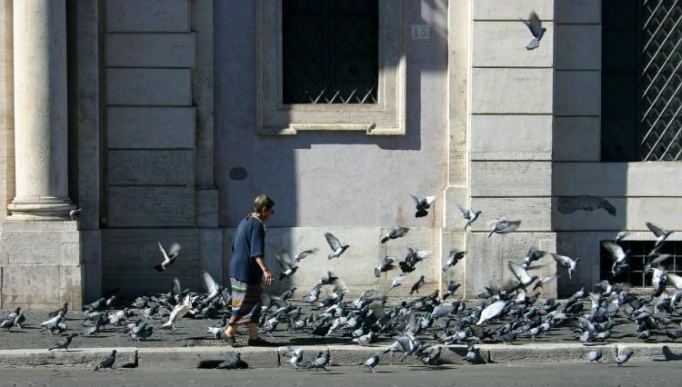Rome Pigeons