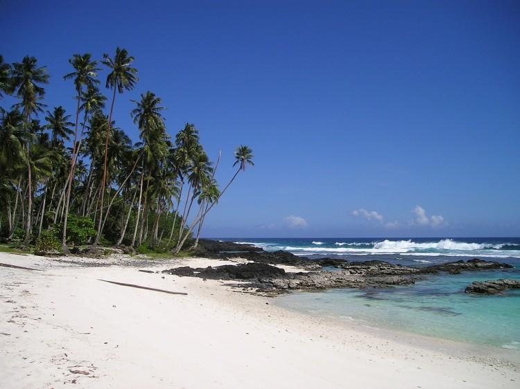 palm-trees-59_1280