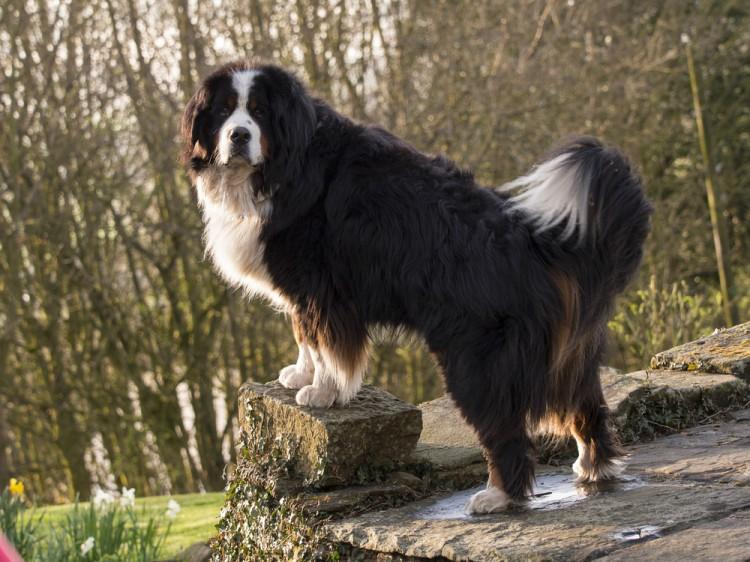 Friendliest Dog Breeds In The World