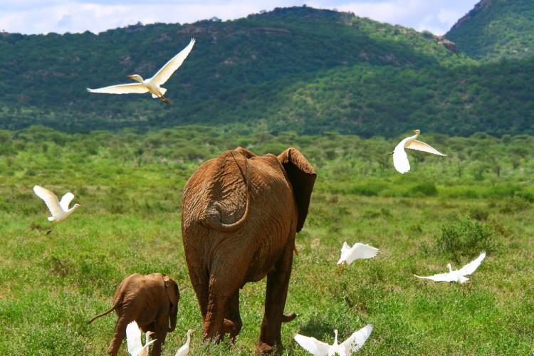 11 Best Nature Documentaries on Amazon Prime