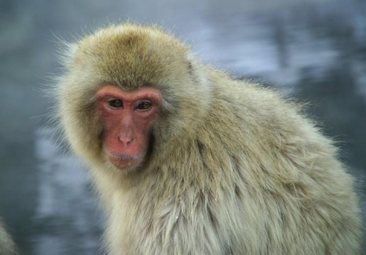 monkey-586247_1280