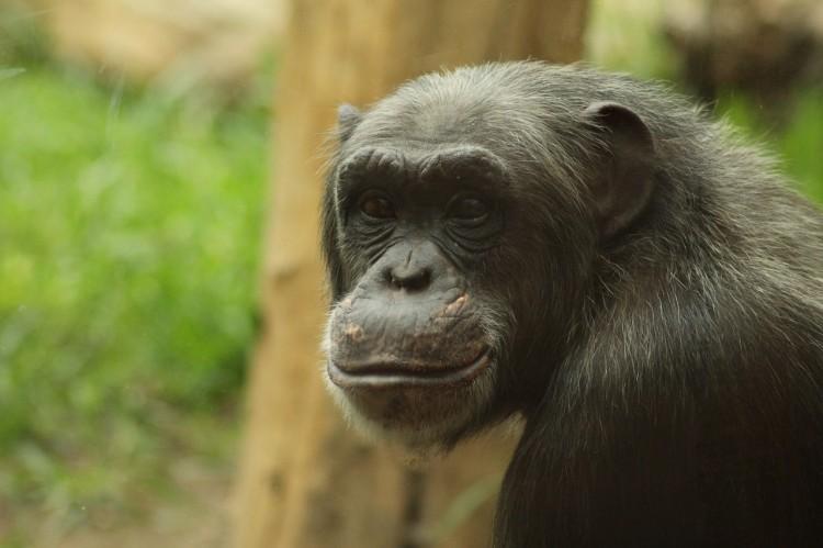 monkey-757210_1280