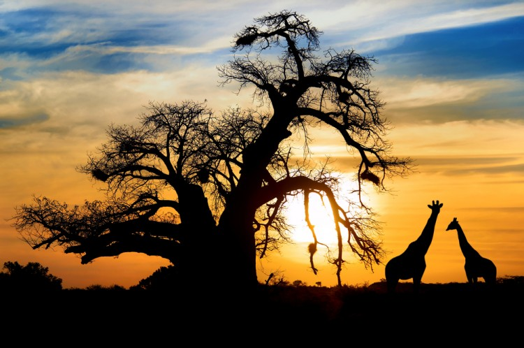 most expensive places to visit in Africa