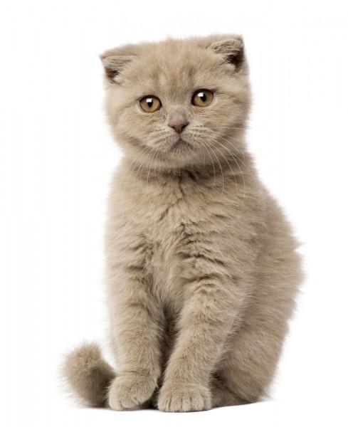 Cute Cheap Cat Breeds