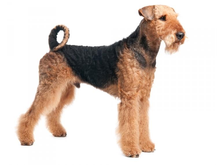 Dog Breed Costs Uk