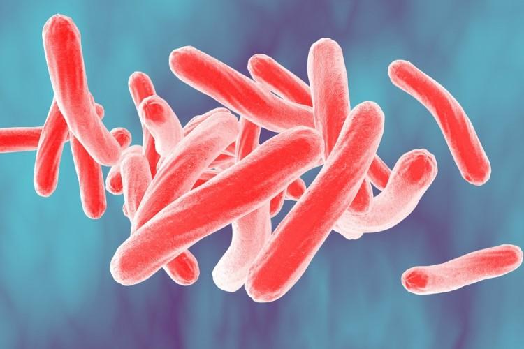 mycobacterium, bacteria, bacterium, closeup, sickness, micro, sepsis, three-dimensional, life, fighting, pathology, disease, epidemic, rod-shaped, medicine, macro,