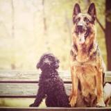 Best dog photo/Shutterstock.com
