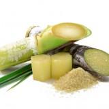 sugar, cane, raw, plant, thailand, farm, closeup, grow, agriculture, green, grass, eat, stem, texture, joint, stalk, chew, herb, background, stout, fiber, harvest, food, edible, produce,