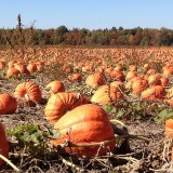 pumpkinz7