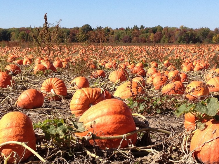 15 Best Apple and Pumpkin Picking Farms Near New York City or New Jersey