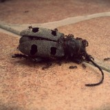 bug-427252_1280