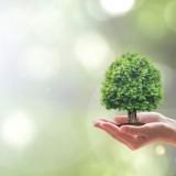 Chinnapong/Shutterstock.com