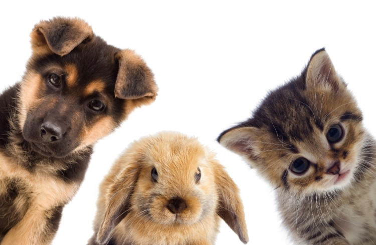 most sexually active animals bunnies kittens puppies