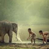 SantiPhotoSS/Shutterstock.com
