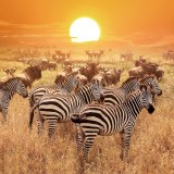 Delbars/Shutterstock.com