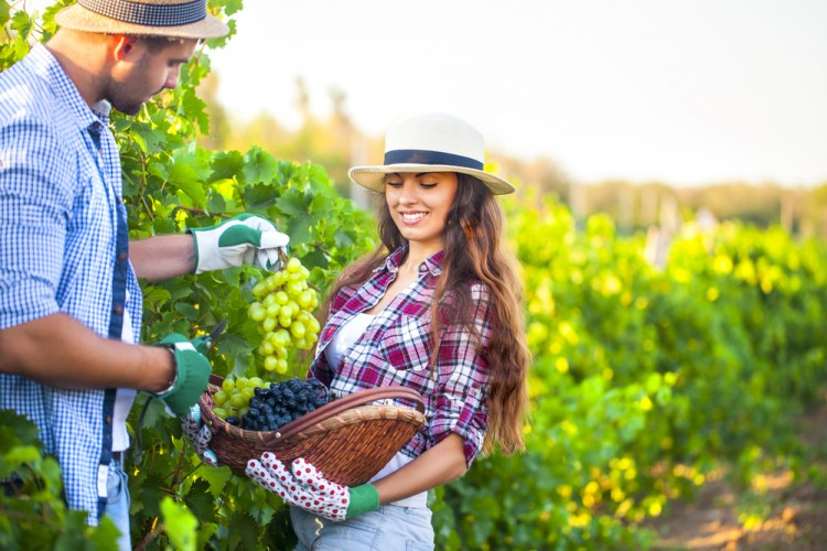 10 Best Paying Summer Jobs in France for American Students