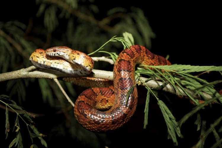 10 Most Common Snakes in America